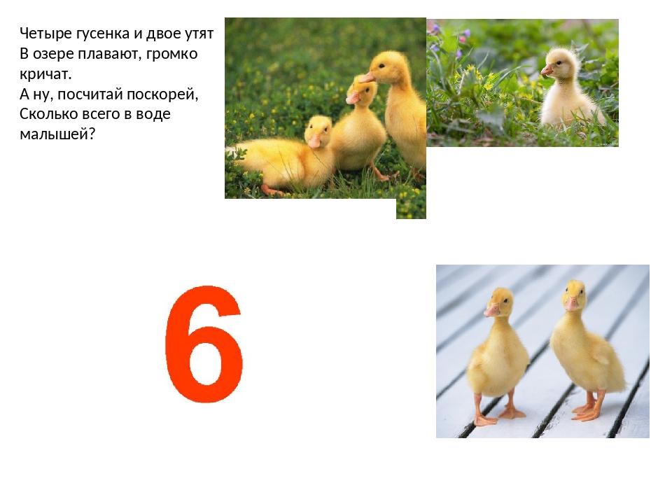 Четыре гусенка и двое утят В озере плавают, громко кричат. А ну, посчитай пос...