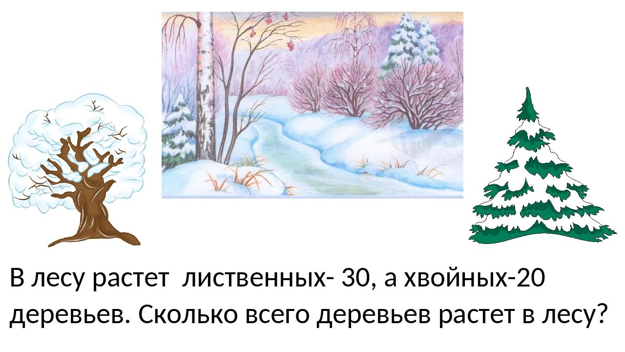 В лесу растет лиственных- 30, а хвойных-20 деревьев. Сколько всего деревьев р...