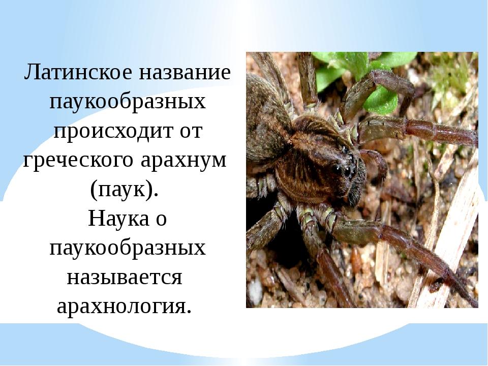 Латинское название паукообразных происходит от греческогоарахнум (паук). На...