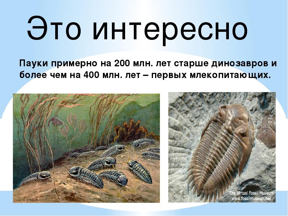 Это интересно Пауки примерно на 200 млн. лет старше динозавров и более чем на...
