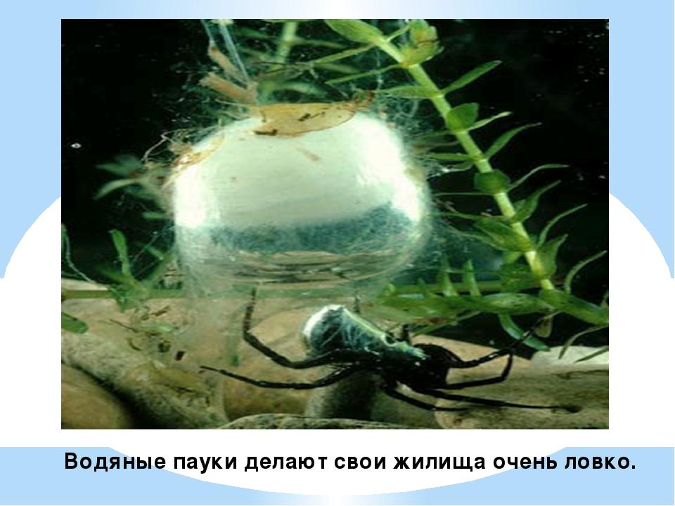 Водяные пауки делают свои жилища очень ловко.
