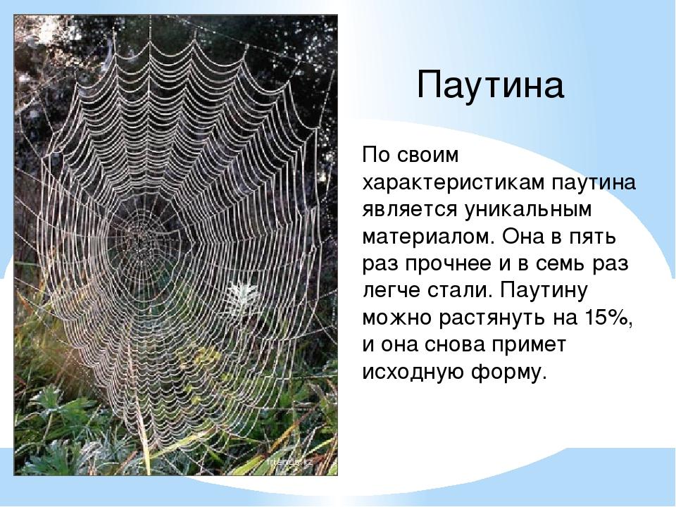 Паутина По своим характеристикам паутина является уникальным материалом. Она...