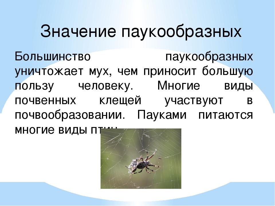 Значение паукообразных Большинство паукообразных уничтожает мух, чем приносит...